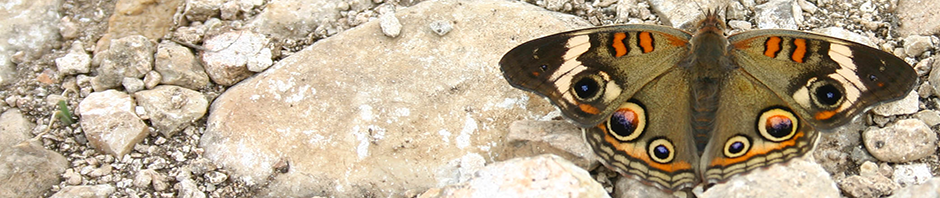 Moth on Limestone